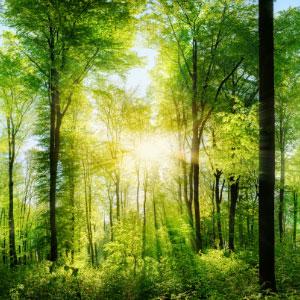 自然の木の免疫力